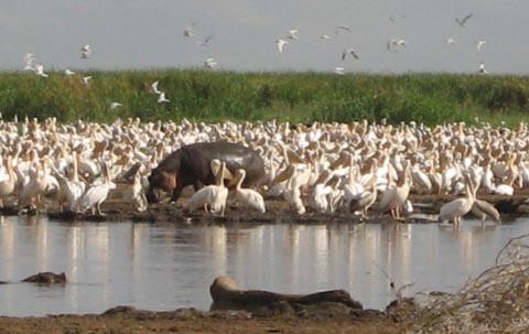 Lake-Manyara-animals2