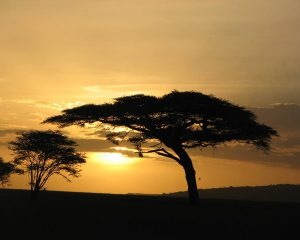 Serengeti-Sun-set