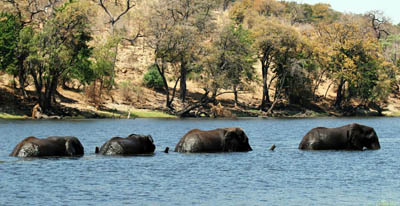 elephants-rufiji-river12