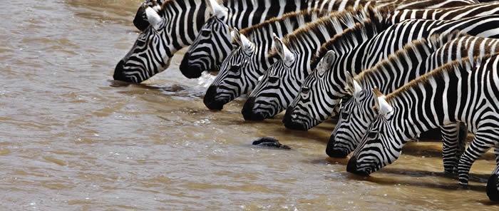 zebras-serengeti-tanzania3