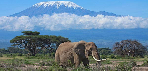 Amboseli_National_Park_033