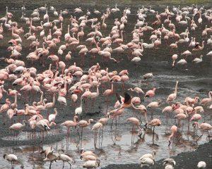 Arusha-National-Park-Flamingo