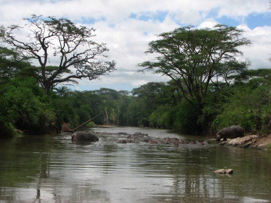 Hipo-Pool-Serengeti