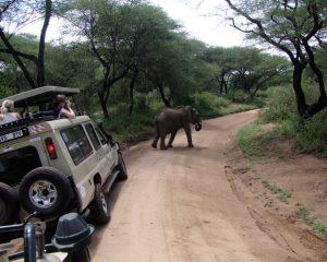Manyara-National-Park-1