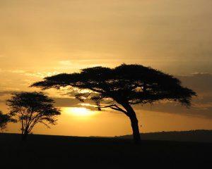 Serengeti-Sun-set