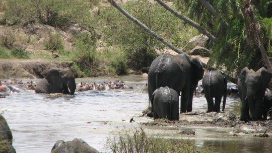 Tembo-River